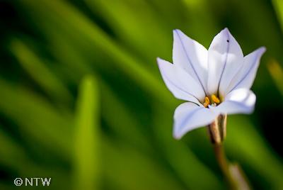 winter flower time