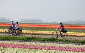 dutch bike tour