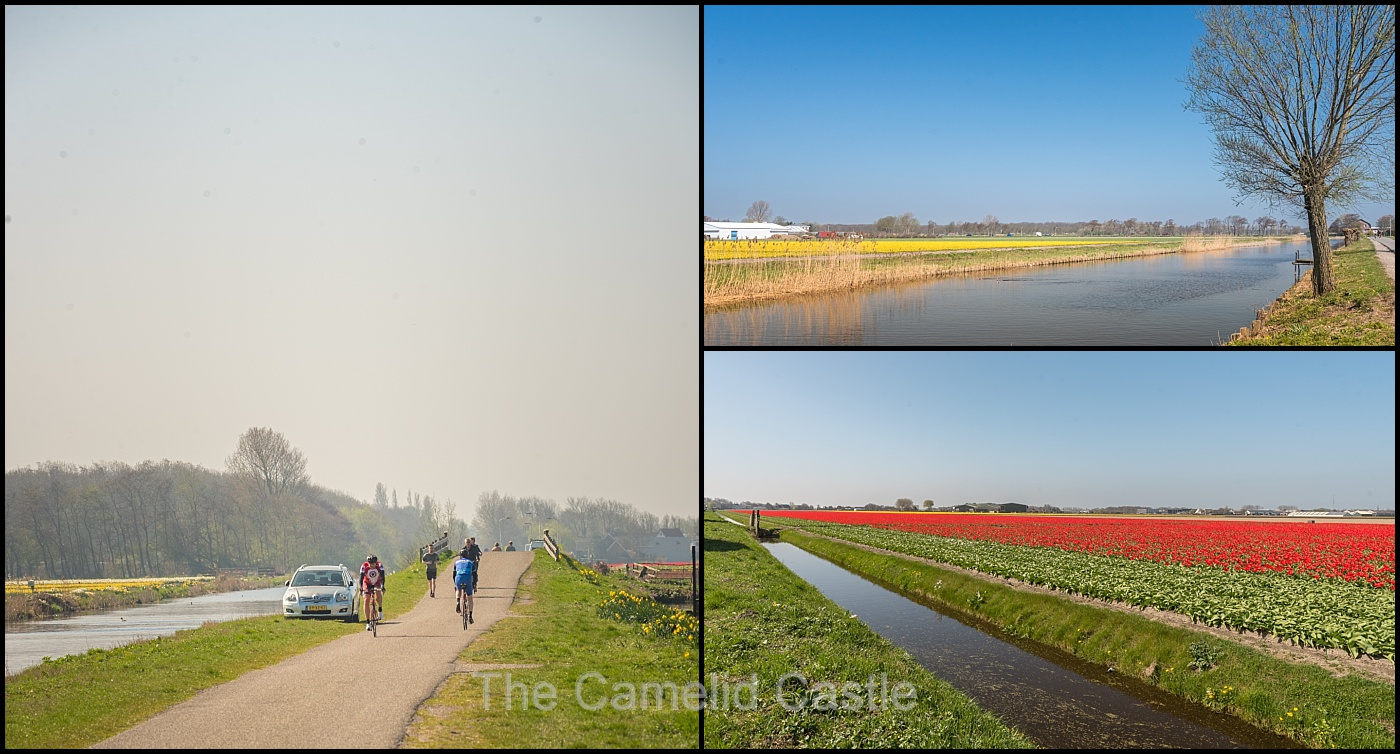 2 april 2017 biking from haarlem to leiden and flower fields galore throughout all of the flower region there are a number of self serve flower stalls with extremely cheap freshly harvested flowers izmirmasajfo